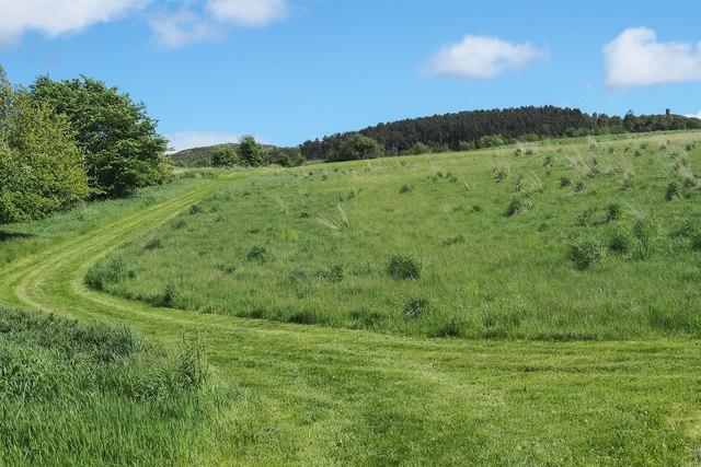 Grassy field, Bonhard