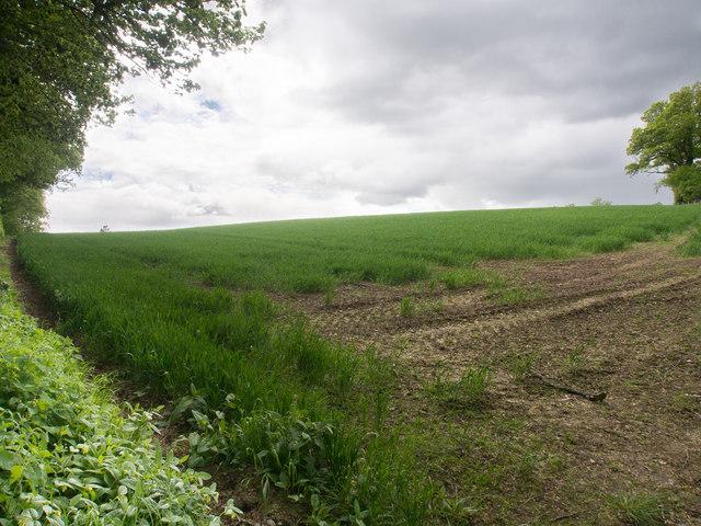 Growing crop, Bonhard