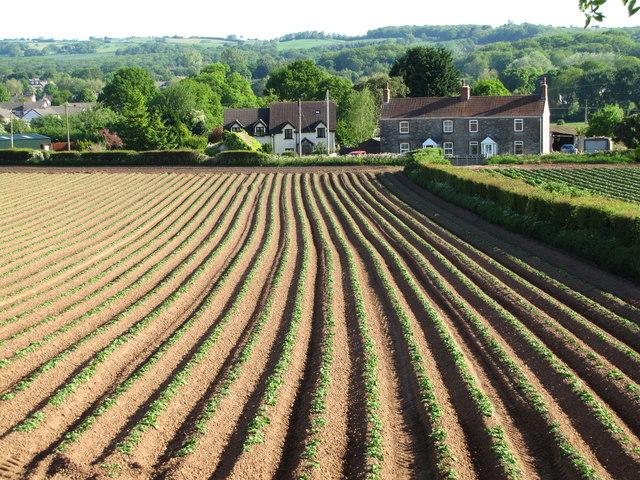 Crop Fields Near Caerwent Quarry