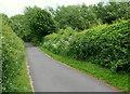SK5359 : Bleak Hills Lane, Mansfield, Notts. by David Hallam-Jones