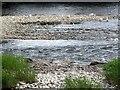 NJ8400 : Herring Gulls on the Dee by Stanley Howe