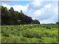 NY7162 : Marshy field below Sunny Plantation by Oliver Dixon