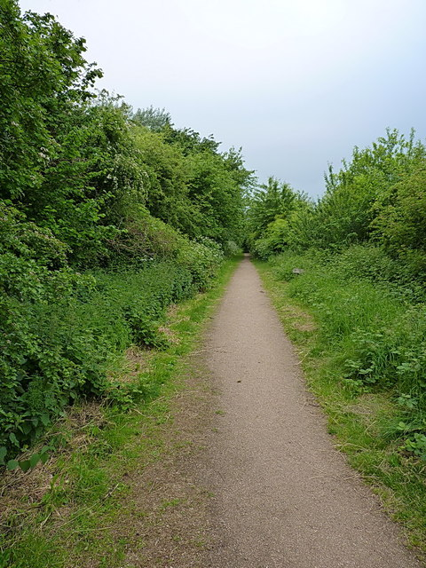 Path in the Nature Reserve