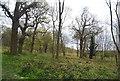 TQ6968 : Lodge Wood, Cobham Park by N Chadwick