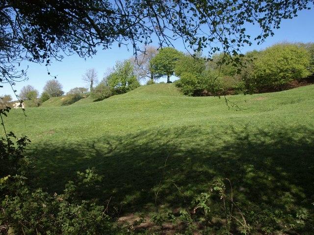 Field and trees near Furley Cross