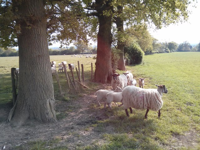 Followed by sheep