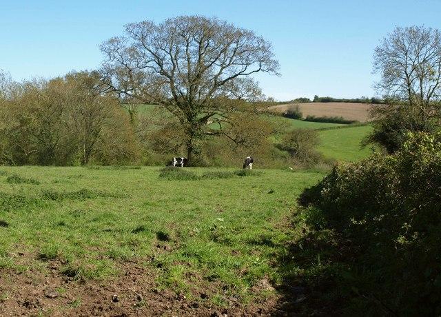 Cattle pasture, Huntley Lane
