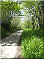 SX3775 : Spring foliage in the lane at Pempwell by Rod Allday