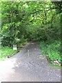 SO9374 : Path leading into Pepper Wood near Fairfield by Richard Rogerson