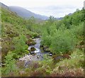 NH1019 : Trees by the Allt Fraoch-choire by Craig Wallace