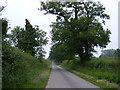TM4681 : Primrose Lane, Clay Common by Geographer