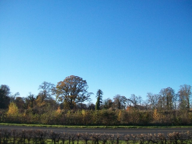 Trees alongside the M1 at Kilsharvan