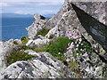 NR7066 : Carraig nam Bodach by sylvia duckworth