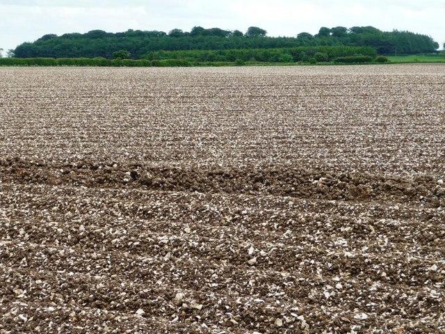 Hilltop field, south of Garrowby Reservoirs