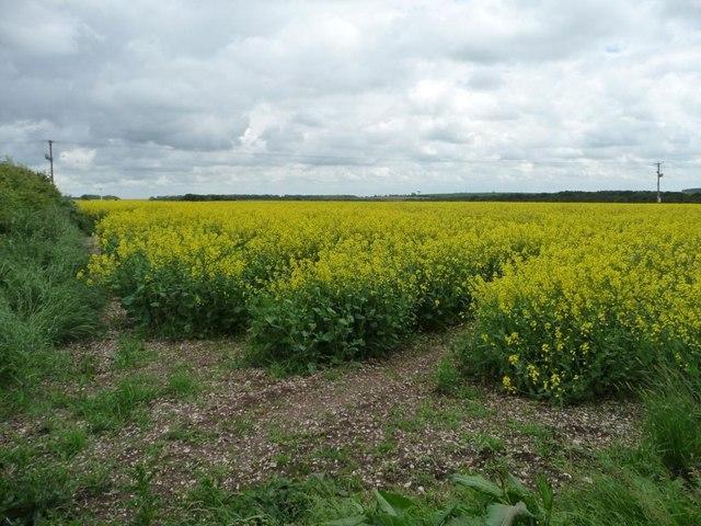 Entrance into a field of oilseed rape