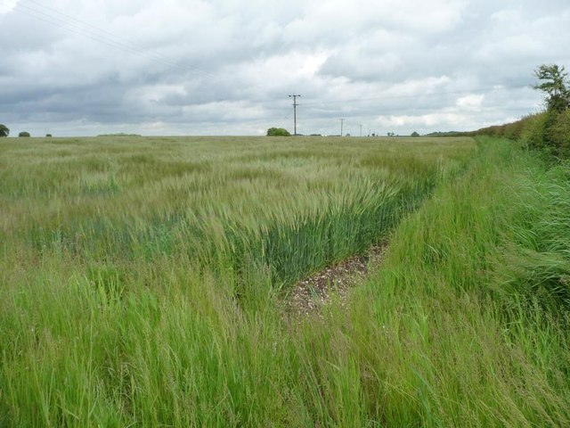 Southern boundary of a barley field