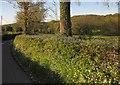 ST2602 : Bluebells in the Yarty valley by Derek Harper