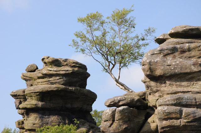 Tree on Brimham Rocks