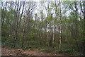 TQ7068 : Broad Oak Wood by N Chadwick