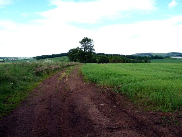 Field Track - Between Blackburn and Edington Hill