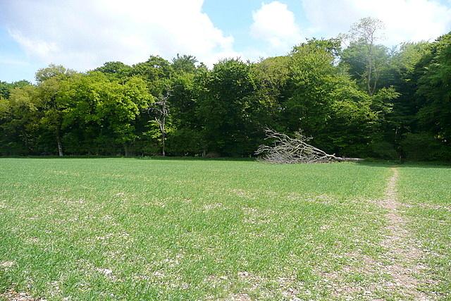 Towards Park Wood