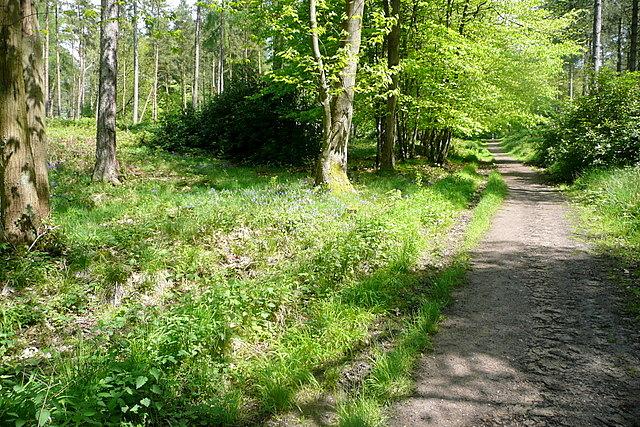 Footpath through Stonor Park
