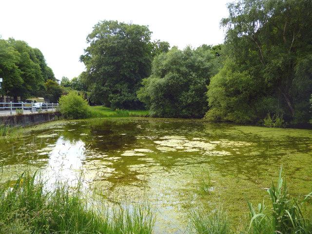 Putney Heath:  Seven Posts Pond