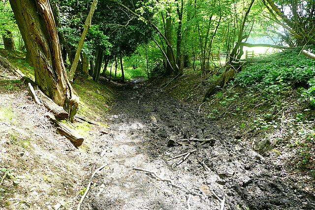 Footpath through Great Wood