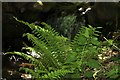 SS8547 : Fern and nettle by the stream by Steve Daniels