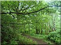 NG2549 : Woodland footpath in Dunvegan estate by Andrew Hill