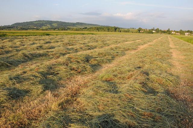 Haymaking in Twyning Meadow
