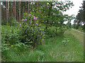SU8665 : Crowthorne Wood by Alan Hunt