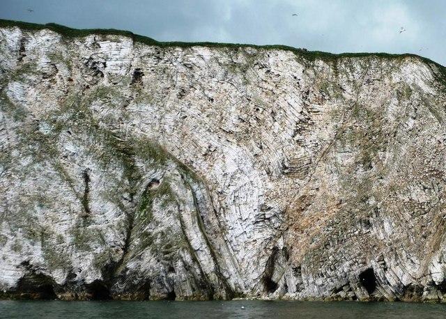 Folded strata, Scale Nab, Bempton Cliffs