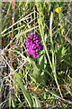 NS9480 : Early Purple Orchid by Alan Murray-Rust