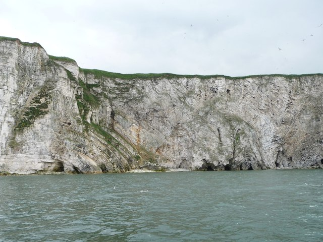 Dipping and folded strata, Scale Nab, Bempton Cliffs