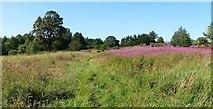 NS3978 : Grassland near Strathleven Estate by Lairich Rig
