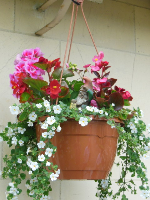 A hanging basket at the Golden Jubilee, Yarn