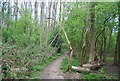 TQ6968 : Footpath, Cobham Wood by N Chadwick