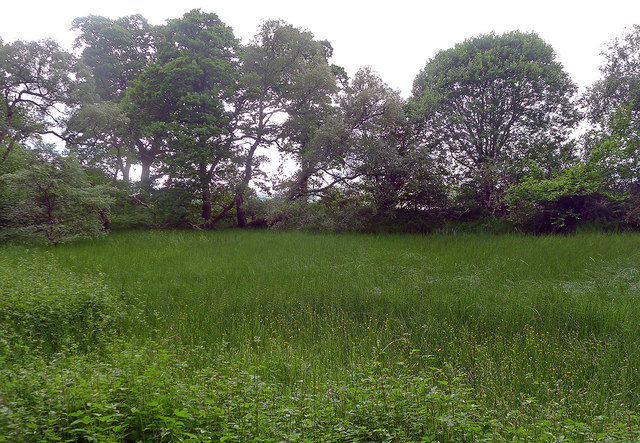 Lochan in Drummondreach Wood