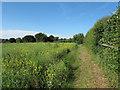 TL6832 : Footpath near Mill House, Finchingfield by Roger Jones