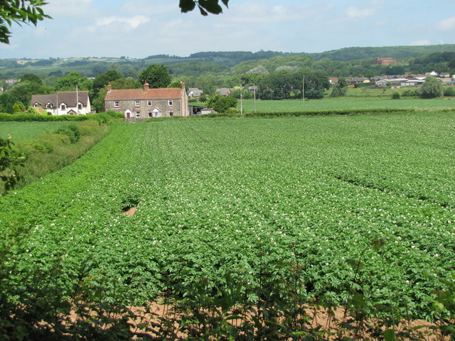 Crop fields close to Caerwent Quarry - 3 weeks later