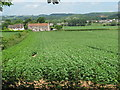 ST4789 : Crop fields close to Caerwent Quarry - 3 weeks later by richard wyson
