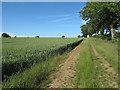 TL6834 : Farm Track near Rook Hall, Finchingfield by Roger Jones