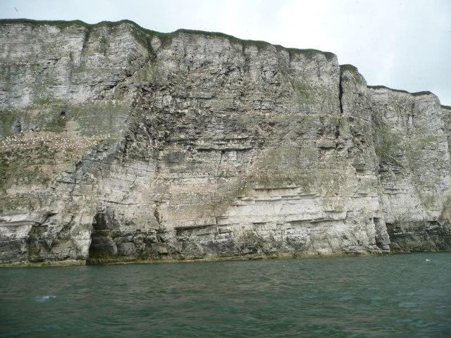 Bempton Cliffs, between Bartlett Nab and Nettle Trip