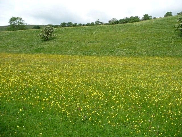Contoured wildflowers in Langstrothdale