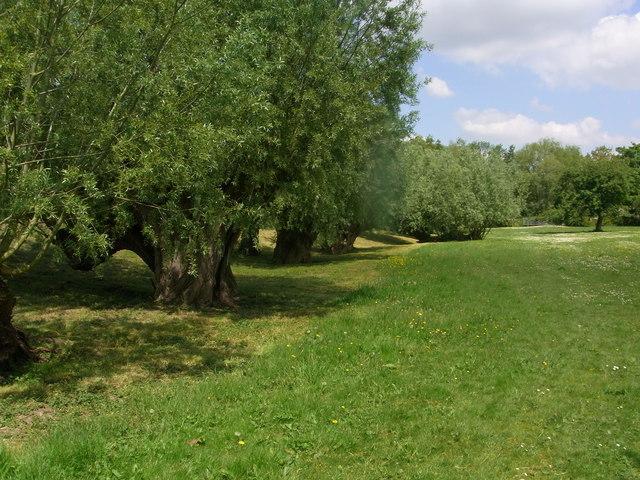 Pollarded willows near Hinton Mill