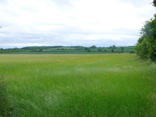 Hay Field at Rectory Farm