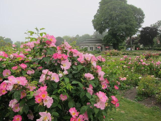 Preston Park Rose Gardens and the Rotunda