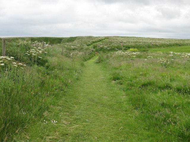 Clifftop path, Bempton cliffs