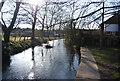 TQ5365 : River Darent by N Chadwick